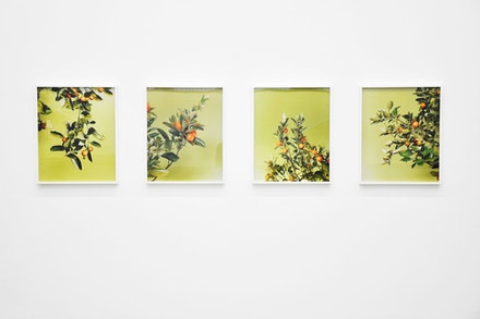 Installationsansicht KW Institute for Contemporary Art/Installation view KW Institute for Contemporary Art. Foto/Photo: Sophia Kesting, 2009.   <i>Untitled</i>, 2007, c-prints, 4 parts.  64,5 x 52,5 x 4 cm 64 x 52 cm Courtesy Johann K&#246;nig, Berlin.