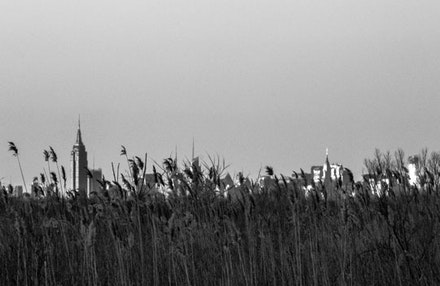 When you're nestled in the reeds of Jamaica Bay, the skyscrapers glimmer in the distance like the city of Oz.