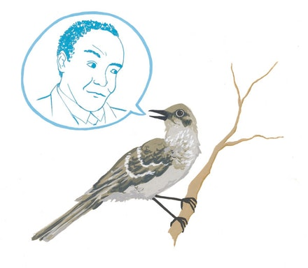 Charlie Parker and a Mockingbird. Illustration by Megan Piontkowski.