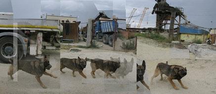 "Iosif Kiraly, ""Reconstruction-Ovidiu Construction Site with Barking Dog,"" 2010 – 12. Image courtesy the artist."