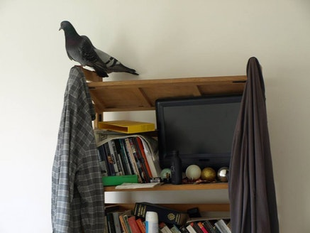 "Nina Power, ""Homing pigeons,"" 2011. Photo: Nina Power."