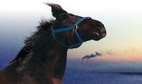 <em>Horses of Fukushima</em>
