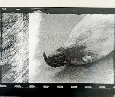 John Wood, Eagle Pelt, 1985, from <em>Words Not Spent Today Buy Smaller Images Tomorrow: Essays on the Present and Future of Photography</em> (Aperture, 2014). Courtesy the family of John Wood.