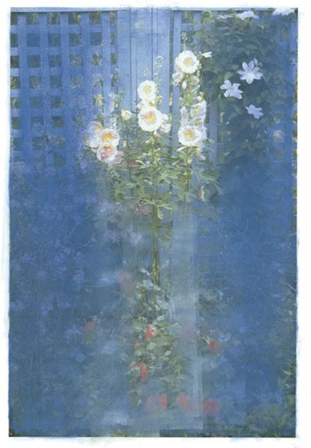 Ellen Phelan, <em>Hollyhocks</em>, 2008. Pigment on Somerset Velvet paper, 47 × 35 ̋. Framed AP2 50 1/2 × 38 1/2×2 ̋.