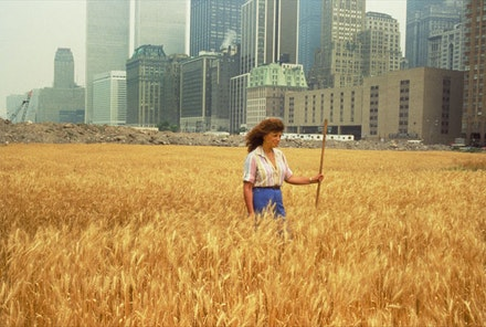 Agnes Denes, <em>Wheatfield–A Confrontation: Battery Park Landfill, Downtown Manhattan</em>, with Agnes Denes Standing in the Field, 1982. Courtesy of the artist and Leslie Tonkonow Artworks + Projects, New York. Photo: John McGrail.