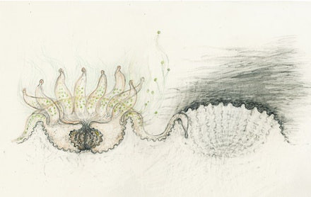 Mel Chin, <em>Endosymbiont Flight, Polyp Death</em>, 2015. Graphite, colored pencil on paper. 10 1/2 × 8 inches. Courtesy the artist.