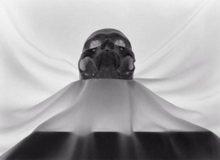 Lynn Stern, <i>Skull #45a </i>, 1991. Selenium-toned gelatin silver print 20 x 24 inches, edition of 8. Courtesy Lynn Stern.