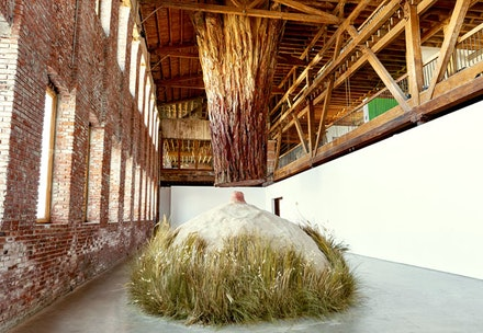 Molly Lowe, <em>Redwood</em>, Pioneer Works, New York, March 11 &#150; April 12, 2016. Courtesy Pioneer Works. Photo: Andy Romer.
