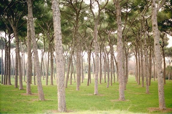 <em>Villa Doria Pamphili, Rome, FOG</em>
