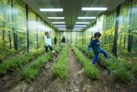 "<p>Martin Roth,<em> ""In May 2017 I cultivated a piece of land in Midtown Manhattan nurtured by tweets."" </em>(<em>Photo © David Plakke/ACFNY</em>)</p>"