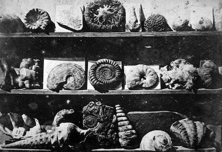Louis-Jacques-Mand&eacute; Daguerre, <em>Fossilized Shells</em>, c.1830s.