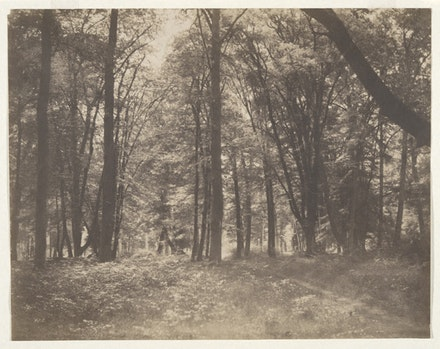 Gustave Le Gray,<em> La forêt de Fontainebleau (The Forest at Fontainebleau)</em>, c.1855. Salt print from a wax-paper negative, 11 5/8 x 14 7/8 in. Courtesy of the Yale University Art Gallery.