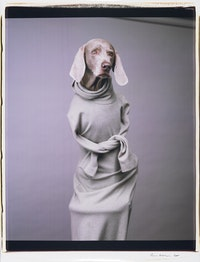 William Wegman, <i>Twisted Hope</i>, 2001. Color Polaroid. 24 x 20 in. Courtesy the artist and Sperone Westwater.
