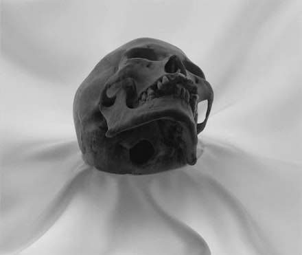 Lynn Stern,<em> Skull #28, </em>1991, gelatin silver print, 16 x 20 inches. Courtesy the artist.
