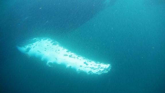 Christy Gast, <em>¿'Onde va la lancha?</em>, 2016, video still (whale fin). Courtesy the artist.