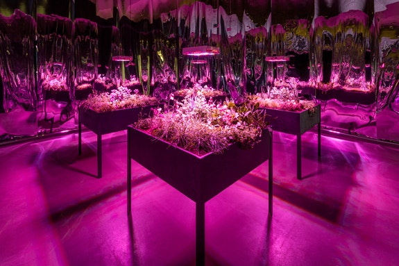 Meg Webster, <em>Solar Grow Room</em>, ARoS Kunstmuseum, Aarhus, Denmark, 2017. © Meg Webster. Courtesy Paula Cooper Gallery, New York.