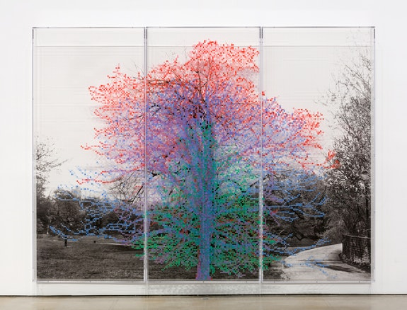 Charles Gaines, <em>Numbers and Trees, Central Park, Series I: Tree #4, Kent</em>, 2015. Acrylic, ink jet print, plexiglass. 3 panels  overall: 95 x 126 1/2 x 5.75 inches. © Charles Gaines. Courtesy Paula Cooper Gallery, New York. Photo: Steven Probert.
