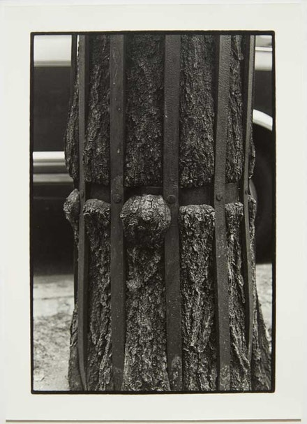 Zoe Leonard, <em>Detail (Tree + Fence)</em>, 1998/1999. Gelatin silver print, 11 3/4 x 8 3/8 inches. © Zoe Leonard. Courtesy the artist, Hauser & Wirth, and Galerie Gisela Capitain, Cologne.
