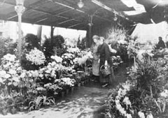 Two women in flower market, Paris, France (1925 or 1926). Frances Benjamin Johnston Collection (Library of Congress).