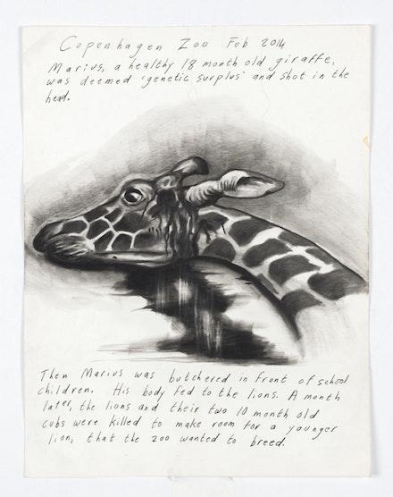 Sue Coe, <em>Copenhagen Zoo, Denmark: Marius</em>, 2017. Graphite on heavy off-white wove paper, 11 1/8 x 8 1/2 inches. &copy; Sue Coe. Courtesy Galerie St. Etienne, New York.