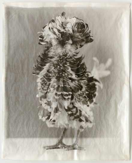 Jean Pagliuso, <em>Variegated #19</em>, 2008. Hand-applied silver gelatin print on handmade Kaji paper, 23 3/4 x 19 1/4 inches. © Jean Pagliuso; Courtesy of the artist and Mary Ryan Gallery, New York.