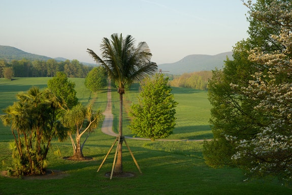 Mary Mattingly, <em>Along the Lines of Displacement: A Tropical Food Forest</em>, 2018. Paurotis palm (Acoelorrhaphe wrightii), ponytail palm (Beaucarnea recurvata), and coconut palm (Cocos nucifera) from agricultural zones 8 and 9 transplanted to zones 5 and 6, 60 x 50 x 22 feet. Courtesy the artist and Robert Mann Gallery. Photo: Jerry L. Thompson.