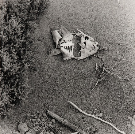 Raul Guerrero, <em>Baja (detail 09A)</em>, 1972 (printed 2016). Gelatin silver print, 14 x 11 inches. Edition 3 of 3 plus 1 AP. ©Raul Guerrero, courtesy of Ortuzar Projects, New York.