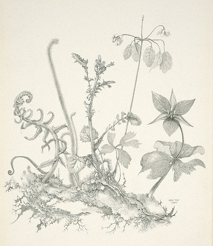 Gray Foy, <em>Connecticut Plants</em>, 1949. Fine Arts Museums of San Francisco; museum purchase, George de Batz Collection, Achenbach Foundation for Graphic Arts Endowment Fund. © 2018 Estate of Gray Foy.