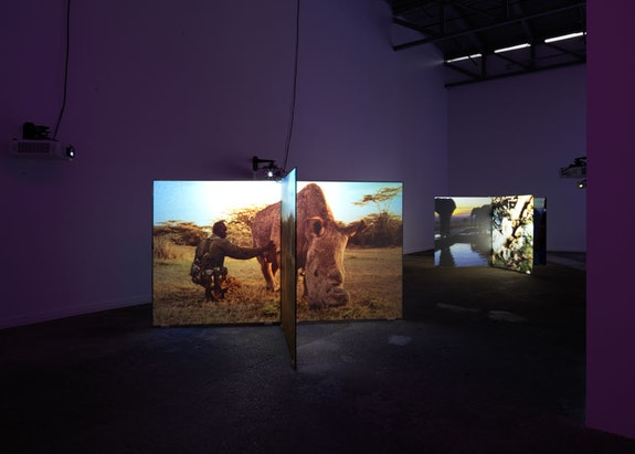 Installation view,<em> Diana Thater</em>, ICA Watershed, Boston, 2018. Photo: Kerry McFate. Courtesy the artist and David Zwirner.
