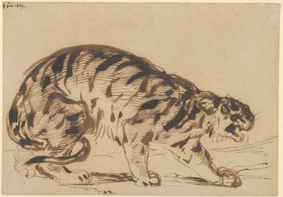Eugène Delacroix, <em>Crouching </em><em>Tiger</em>, 1839. Pen and brush and iron gall ink, 5 3/16 x 7 3/8 inches. The Metropolitan Museum of Art, New York, Gift from the Karen B. Cohen Collection of Eugène Delacroix, in honor of Sanford I. Weill, 2013.