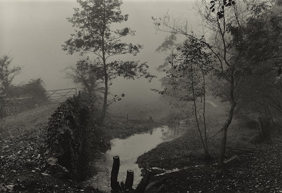 Don McCullin, <em>Woods near My House, Somerset, </em>c.1991. Courtesy the artist and Tate Britain.