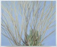 "Sylvia Plimack Mangold, ""Winter Maple,"" (2007). Oil on linen. 20 x 24 in. Photo: Jason Mandella."