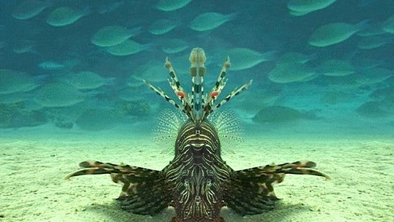 <i>Careless Reef Part 4</i>: Marsa Abu Galawa. Courtesy of Gerard Holthuis.