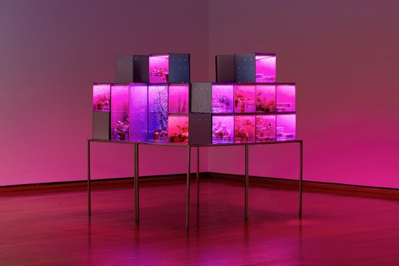 Installation view: <em>Suzanne Anker: 1.5° Celsius</em>, Everson Museum of Art, 2019. Photo: Raul Valverde.