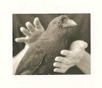 Alice Momm, A Bird in the Hand: Hawaiian Crow, 1992. Sepia-toned photograph. © Alice Momm.