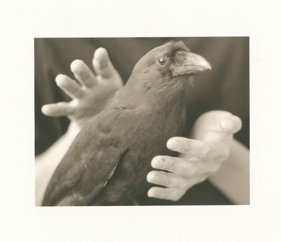 Alice Momm, A Bird in the Hand: Hawaiian Crow, 1992. Sepia-toned photograph. © Alice Momm.