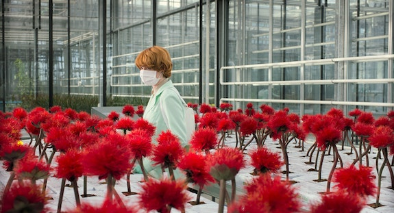 Emily Beecham in Little Joe. Image courtesy of the Cannes Film Festival.