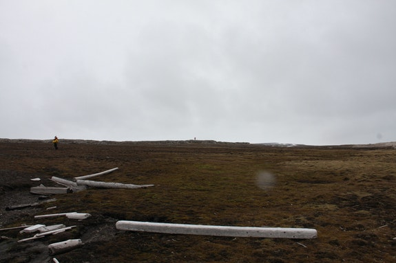 Svalbard frames.
