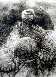 Janet Culbertson, Galapagos Tortoise, 1975. Ink and pastel on rag paper, 90 x 72 inches. Photo: Gary Mamay.