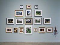 Installation view: <em>Karen Kilimnik</em>, 303 Gallery, New York, 2019. Photo: John Berens.