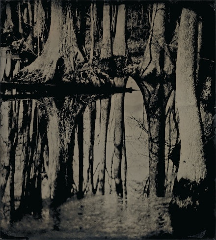 Sally Mann, <em>Blackwater 25</em>, 2008–2012. Tintype. Collection of the artist. © Sally Mann.