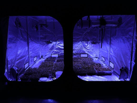 Installation view: <em>Tiffany Jaeyeon Shin: Microbial Speculation of Our Gut Feelings</em>, Recess, Brooklyn. Courtesy the artist and Recess.