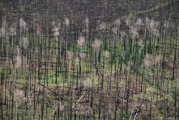 Burned Forest, Alberta Tar Sands. Credit: Darryl Whetter.