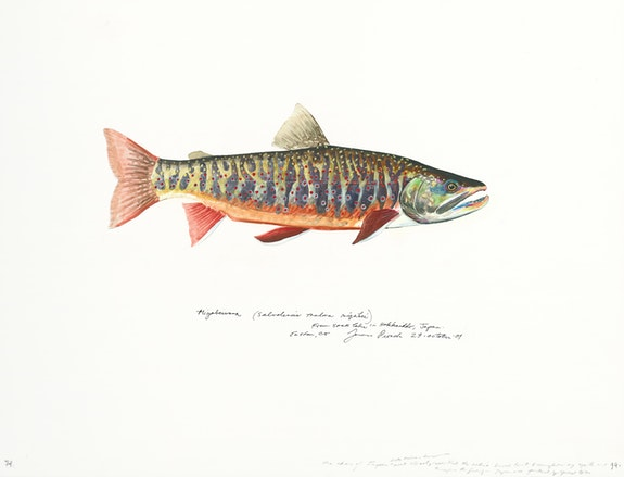 James Prosek, <em>Miyabeiwana (Lake Shikaribetsu, Hokkaido, Japan), </em>2001, Watercolor, guache, colored pencil, and graphite on paper15 3/4 x 20 in. Courtesy of James Prosek and Waqas Wajahat, New York.