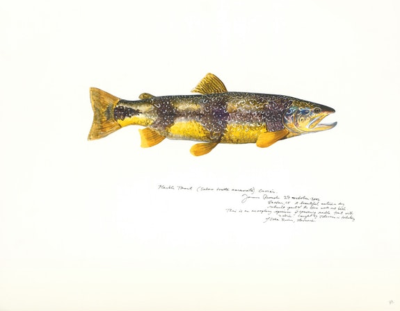 James Prosek, <em>Marble Trout (Zadlascicia River, Slovenia)</em>, 2002Watercolor, guache, colored pencil, and graphite on paper, 19 x 24 in. Courtesy of James Prosek and Waqas Wajahat, New York.