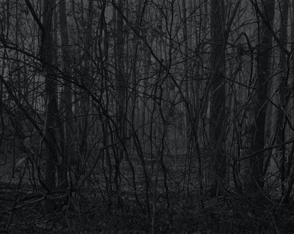 "Dawoud Bey, <em>Untitled #15 (Forest with Small Trees)</em>, from ""Night Coming Tenderly, Black,"" 2017. Silver gelatin print, 44 x 55 inches. © Dawoud Bey. Courtesy the artist, Sean Kelly Gallery, Stephen Daiter Gallery, and Rena Bransten Gallery."