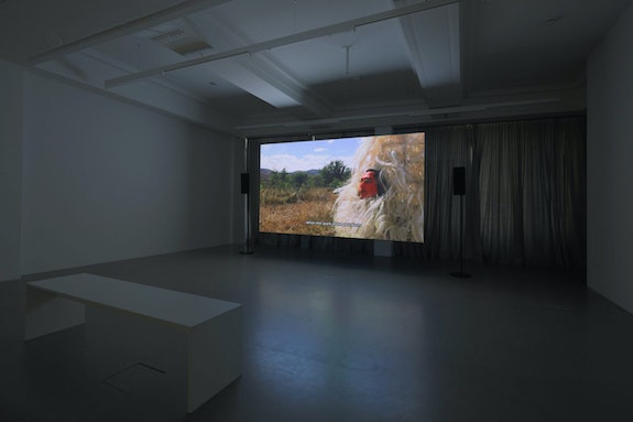Installation view: Naomi Rincón Gallardo, <em>Resiliencia Tlacuache [Opossum Resilience]</em>, 2019. HD video, color, sound, 1601. 11th Berlin Biennale, daadgalerie. Courtesy Naomi Rincón Gallardo. Photo: Silke Briel.