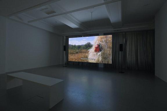 Installation view: Naomi Rincón Gallardo, <em>Resiliencia Tlacuache [Opossum Resilience]</em>, 2019. HD video, color, sound, 1601. 11th Berlin Biennale, daadgalerie. Courtesy Naomi Rincón Gallardo. Photo: Silke Briel.
