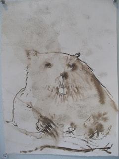Beaver study.