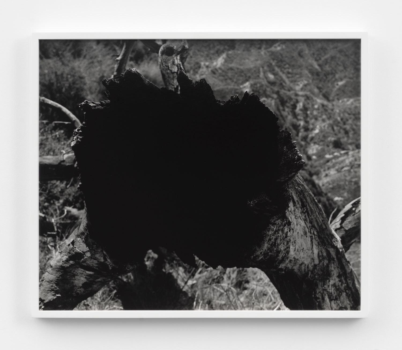 Mark McKnight, <em> Untitled (Tree Void II)</em>, 2021. Gelatin silver print, 20 x 24 inches. Courtesy Klaus Von Nichtssagend Gallery, New York.